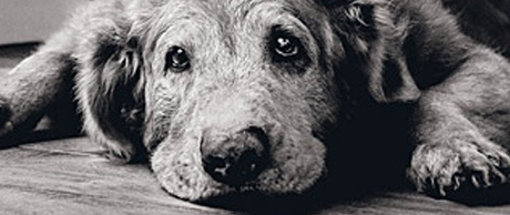 Old Dogs by Michael S Williamson